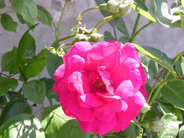 Macro e Flora